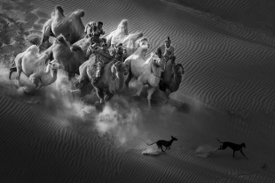 FIAP-Honorable-Mention_Xiping_An_China_Camel_Dog1