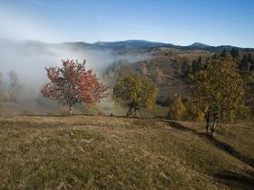 Туман показує ще на осінь